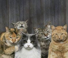 This made me #LAUGH! angry cats