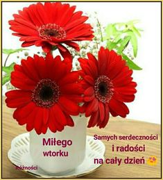 Happy Sunday, Good Morning, Floral, Flowers, Plants, Humor, Frases, Polish, Pictures