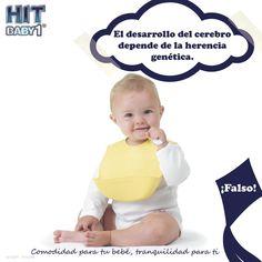 Creciendo con Hit Baby1: El desarrollo del cerebro depende de la herencia genética. #bebé #curiosidades #genética