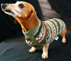 How do you keep your wiener warm? Put a sweater on it :) hahahahahahaha. SN: How cool would it be to have matching sweaters with you dog? Whenever I get a dog I will let you know.