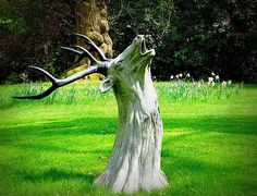 Individuals frequently locate the old tree stumps in a garden not so much valuable and they search for approaches to