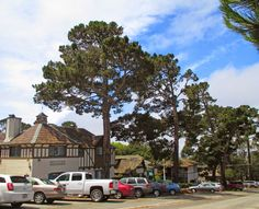 CARMEL BY THE SEA: Friends of Carmel Forest Tree Tour with Dr. Matt Ritter