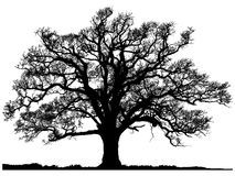 Winter Oak Silhouette - Download From Over 50 Million High Quality Stock Photos, Images, Vectors. Sign up for FREE today. Image: 11778947