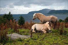 My favorite horse.... Such beautiful coats
