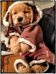 This cuteness has removed my ability to can. I can not.