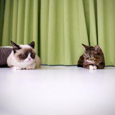 Grumpy Cat, Lil' Bub. Lil' Bub, Grumpy Cat.