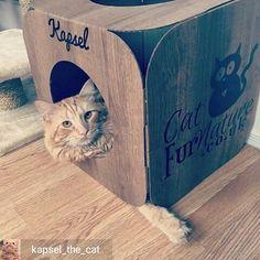 @Regrann from @kapsel_the_cat -  Kapsel in da house!  #catlove #kapsel #cats #catnap  #catsofinsta #catsofworld #catsoftheworld #catsofinstagram #bestmeow #bestcatsofinsta #purrfect #persiancat  #meowdel #mainecoon #tabby #turkishangoracat #gingertabby #orangecat #orangetabby #animalsaddict #instacat #instapet #instakitten #petstagram #instafollow #instamood #fluffy #best_meow #fluffycatcrew #catfurnature  @catfurnature