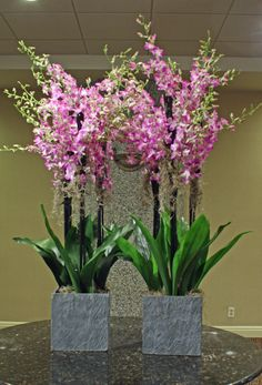 """Orchid Jungle"" Tom Kenison AIFD"