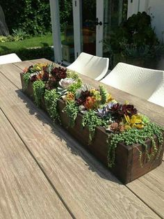 Succulent Centerpieces Ideas for Tables 1 Succulent garden diy, Diy succulents centerpiece, Succulen Succulents In Containers, Cacti And Succulents, Planting Succulents, Potting Succulents Diy, Succulent Centerpieces, Succulent Arrangements, Centerpiece Ideas, Succulent Gardening, Container Gardening