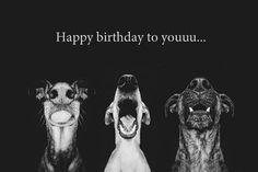 happy birthday nose dog - Sök på Google