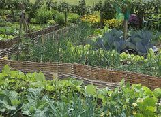 Associer légumes, plantes et fleurs contre les maladies et les parasites