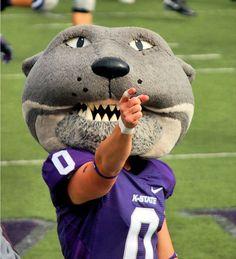 Kansas State University Wildcats  football mascot - Willie the Wildcat