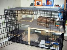 Indoor Housing Tips & Examples - Rabbits United Forum Bunny Cages, Rabbit Cages, Dog Cages, Rabbit Life, House Rabbit, Guinea Pig Toys, Guinea Pigs, Bunny Room, Indoor Rabbit
