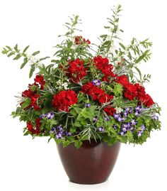 Proven Winners - Angelface® Cascade White - Summer Snapdragon - Angelonia hybrid white plant details, information and resources. Container Flowers, Container Plants, Container Gardening, Outdoor Flower Planters, Outdoor Flowers, Red Plants, White Plants, Red Geraniums, Gardens