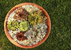 """Bookmark and Share Succulent """"Potscape""""  Create a small """"potscape"""" in a low planter of any type using your favorite selection of succulents. Make sure it has drainage holes, however."""