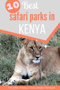 The best places to go in Kenya to spot incredible wildlife! The 10 best safari parks in Kenya! Kenya Travel, Where To Go, Places To See, The Good Place, Parks, Safari, Wildlife, Challenges, The Incredibles