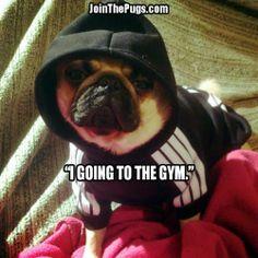Gym Pug - Join the Pugs