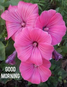 Good Morning Wishes Friends, Good Morning Msg, Good Morning Coffee, Good Morning Flowers, Good Morning Messages, Good Morning Greetings, Good Morning Beautiful Pictures, Good Morning Images, Goodmorning Quotes For Her