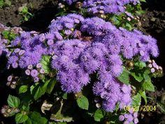 hawaiian flowers carlsbad