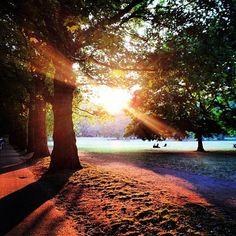 Not so green Green Park taken by @tmnglny! #igerslondoninthepark