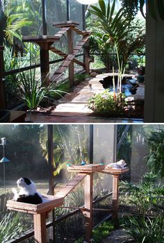 These Are The Most Epic Cat Patios (AKA Catios) We've Ever Seen - Cats On Catnip cute food diy garten witzig Cat Jungle Gym, Cat Gym, Outdoor Cat Enclosure, Diy Cat Enclosure, Carpe Koi, Cat Playground, Cat Garden, Outdoor Cats, Cat House Outdoor