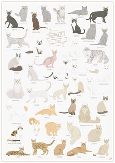 PROMO The World of Cats cat breeds poster cat art by Follygraph
