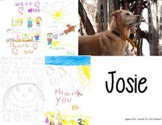 Testimonials from WestVet Veterinary Clients.   www.westvet.net