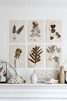 Botanical art as wall prints. Illustration Botanique, Botanical Illustration, Home And Deco, Botanical Prints, Decoration, Interior Decorating, Gallery Wall, Wall Decor, Diy Crafts