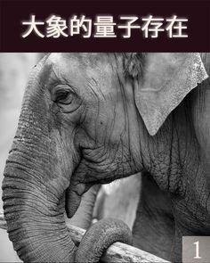 我是一头大象,我在这里分享我自己作为一头大象在这个地球上我的体验。我的历史在这个物质存在界的演变里面,和在中间的一些洞察和视角,关于我们与地球、人类和这个物质存在界等如一个整体的关系。一个人将感知到,因为在我们的物质实化和设计中我们是如此巨大,那个以我们的移动、我们的身体移动为基础,我们费劲地移动。但是,从当我是一头幼象时,实际上,我身体上地体验我自己真的相当的轻、在轻松中,事实上我身体上地与我的身体和设计一起移动。