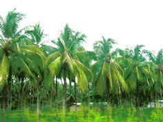 palmeras de esmeraldas