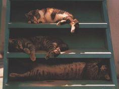 """dans la série """"rangez vos chats"""" (ben oui : quand y'en a plusieurs, faut s'organiser !!!) : nouvelle version de l'étagère..."""