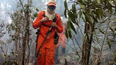 NONATO NOTÍCIAS: Bahia Sem Fogo intensifica combate à incêndio no m...