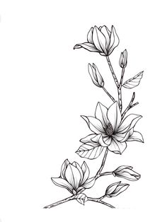 Magnolia Rose and Lily Flower Drawing Magnolia Rose and Lily Flower Drawing. Magnolia Rose and Lily Flower Drawing. Magnolia Flower Frame Drawing in rose flower drawing Magnolia flower frame drawing Flower Line Drawings, Flower Sketches, Art Sketches, Flower Outline, Flower Art, Flower Frame, Lotus Flower, Floral Drawing, Motif Floral