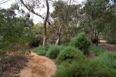 Sustainable garden design, I love the bush feel to this garden.