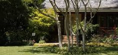 Image result for leopard trees in gardens