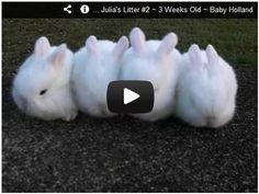 Sweet Baby Bunnies! Watch here: http://gdurl.tk/9A