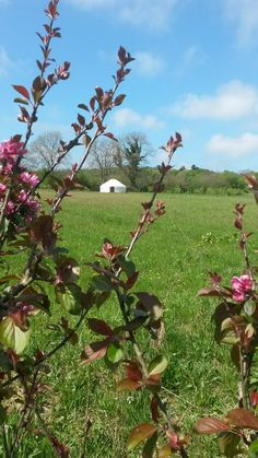 The Yurt Farm, Ceredigion, Wales. A little yurt campsite on an organic farm in West Wales. We've got a few weeks still available for the summer holidays http://www.organicholidays.com/at/2481.htm