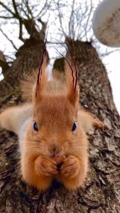 Cute Wild Animals, Baby Animals Super Cute, Cute Little Animals, Cute Funny Animals, Animals Beautiful, Happy Animals, Nature Animals, Animals And Pets, Cute Squirrel