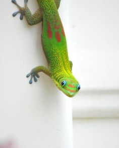Tropical Bright Neon Green Hawaii Gecko Portrait Macro #photography #nature #etsyfollow @maddenphotography