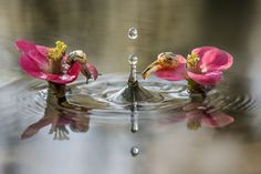 Alberto Ghizzi Panizza photographed these snails that were watching water droplets falling in a pond in the wetlands on the banks of the Po River near Parma, Italy.Picture: Alberto Ghizzi Panizza/Solent News