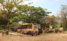 Safari Journey - Bali Safari Marine Park