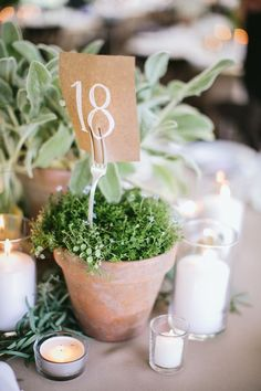 Vintage garden wedding with potted herb centerpieces / http://www.himisspuff.com/wedding-table-numbers-centerpieces/5/