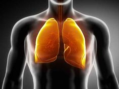 15 Plants and Herbs That Can Boost Lung Health, Heal Respiratory Infections And Even Repair Pulmonary Damage