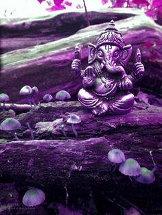 Ganesh will always be my fave. Purple Haze, Shades Of Purple, Purple Grey, Lilac, Lavender, Lord Ganesha, Sri Ganesh, Purple Chakra, Om Gam Ganapataye Namaha