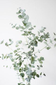 série de plantes