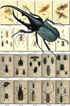 INSECTS-13-b1 Collection of 223 vintage illustrations Scarab