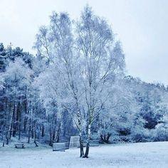 【sarah.fimu】さんのInstagramをピンしています。 《#invierno #hiver #冬 #winter #겨울 #schnee #nieve #neige #雪 #snow #눈 #natur #nature #naturista #naturaleza #自然 #wald #자연 #forest #bosque #selva #foret #森林 #woods #숲 #landscape #paisajes #paysage #region #tree》