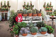 Eurosa (@eurosa_plant) | Twitter