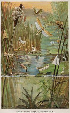 Vintage Print German Butterflies Brehms by CarambasVintage on Etsy