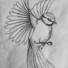 blue tit sketch #bluetit #tomtit #bird #flying #drawing #sketch #illustration #art #artwork #blackwork #pencil #pencildrawing #blackandwhite